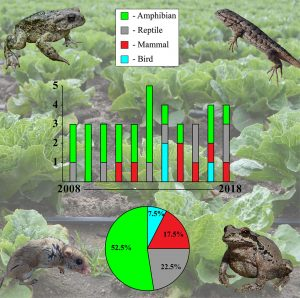 "(Graphical abstract for ""There's a frog in my salad! A review of online media coverage for wild vertebrates found in prepackaged produce in the United States,"" Hughes, et al)"